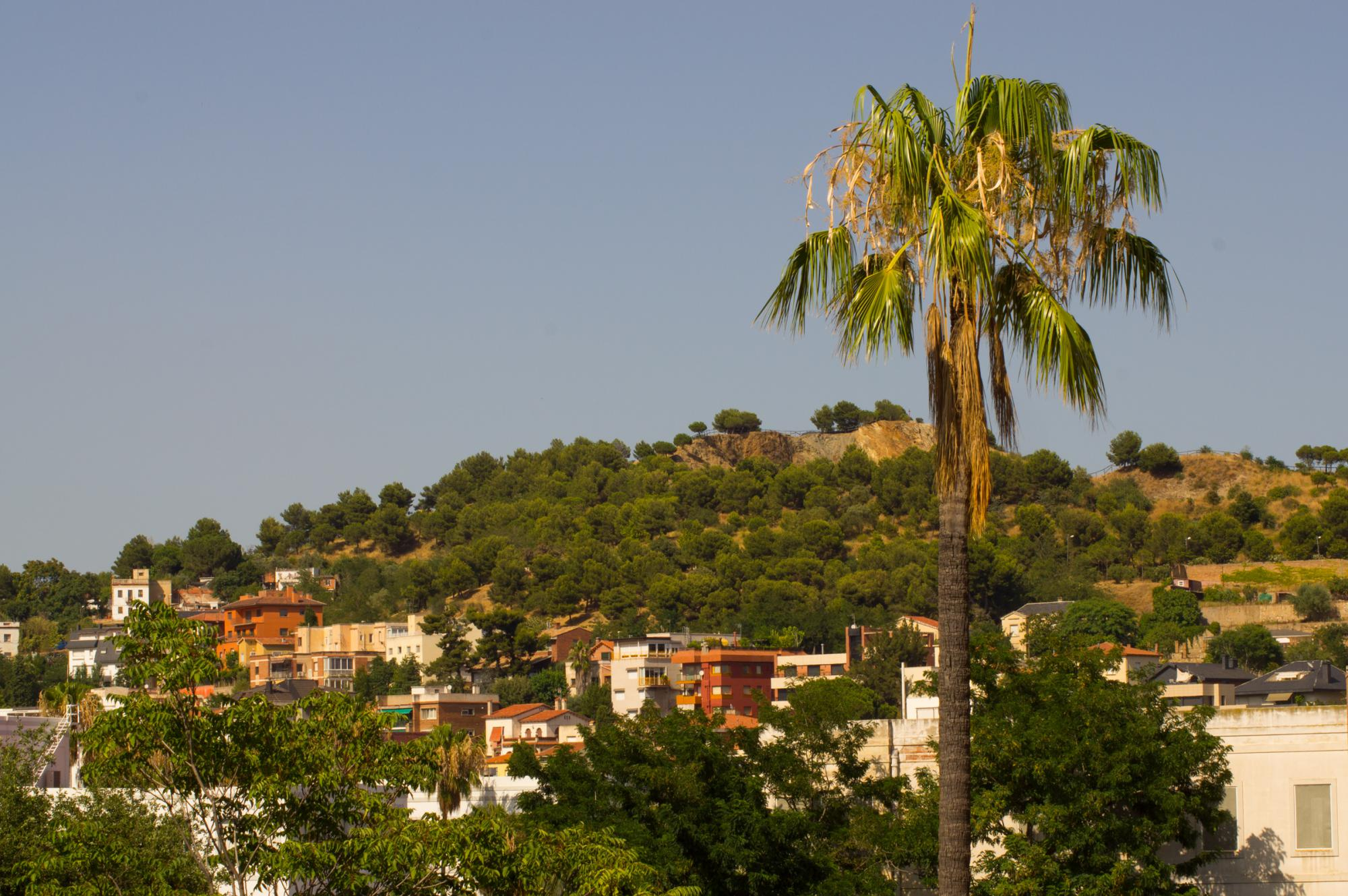 View of a palm tree and a hill in Barcelona